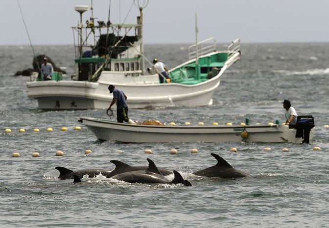 FILE - In this Sept. 2, 2010 file photo, fishermen drive bottle-nose dolphins into a net during their annual hunt off Taiji, Wakayama Prefecture, western Japan. A Japanese government spokesman defended an annual dolphin hunt Monday, Jan. 20, 2014, one day after U.S. Ambassador to Japan Caroline Kennedy tweeted tweeted that she was deeply concerned by the inhumanity of the practice. Chief Cabinet Secretary Yoshihide Suga told a news conference Monday that dolphin fishing in Japan is carried out appropriately in accordance with the law. (AP Photo/Kyodo News, File)  JAPAN OUT, MANDATORY CREDIT