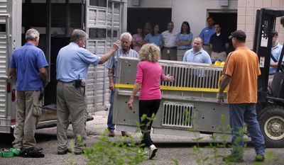 FILE-This Friday, May 4, 2012 file photo shows workers transporting an animal from the Columbus Zoo in Columbus, Ohio to Zanesville, Ohio as Marian Thompson, center, touches the cage.  In a letter dated Dec. 30, 2013, Thompson, the widow of an exotic animal owner who released dozens of creatures from their eastern Ohio farm has told state officials she has relocated the wild animals that survived the incident. (AP Photo/The Columbus Dispatch, Tom Dodge, File)