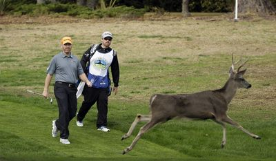 Troy Matteson, left, walks down to the third green of the Monterey Peninsula Country Club Shore Course as a buck runs out of the way during the first round of the AT&T Pebble Beach Pro-Am golf tournament on Thursday, Feb. 6, 2014, in Pebble Beach, Calif. (AP Photo/Eric Risberg)