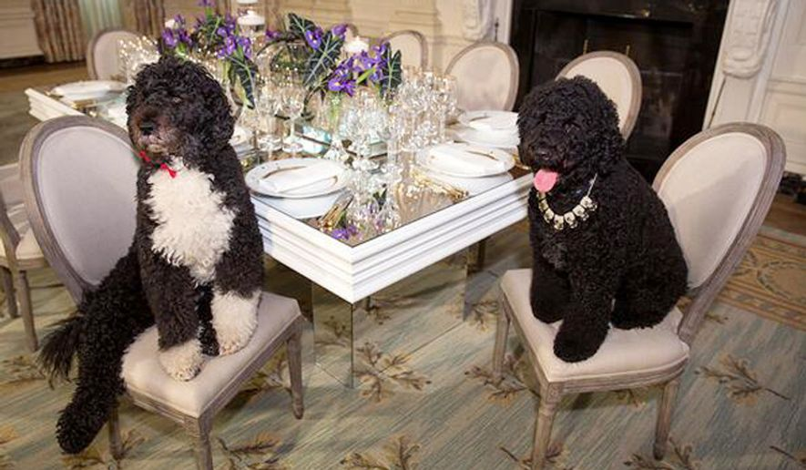 Bo and Sunny Obama were decked out early for Tuesday night's State Dinner.