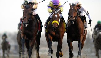 In this photo provided by the New York Racing Association, Samraat, left, with Jose L. Ortiz aboard, captures the Gotham Stakes horse race at Aqueduct Racetrack in New York, Saturday, March 1, 2014. (AP Photo/New York Racing Association, Adam Coglianese)