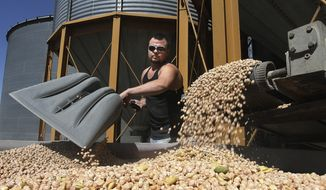 FILE - In this Aug. 28, 2013 file photo, Florentino Ornelas, mill assistant at Blue Mountain Seed in Walla Walla, Wash.,unloads chickpeas for processing at the plant. Acreage devoted to chickpeas has exploded in the past decade in Washington and Idaho, which grow some two-thirds of the nation's supply. Chickpeas require little water, and that's a major plus in the dry region.  (AP Photo/Tri-City Herald, Paul T. Erickson, File)