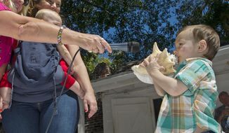 In this photo provided by the Florida Keys News Bureau, 3-year-old Frank Umlauf, right, blows a conch shell during the Conch Shell Blowing Contest Saturday, March 1, 2014, in Key West, Fla. From left, is contest announcer Leigha Fox and Cindy Price-Umlauf, the boy's mother. The event attracted entrants from 3 to 77 years old who were evaluated on the quality, novelty, duration and loudness of sounds they produced. (AP Photo/Florida Keys News Bureau, Rob O'Neal)
