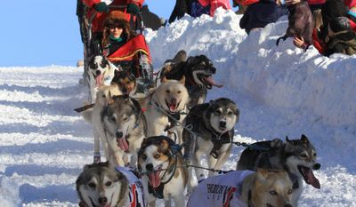 Musher Aliy Zirkle of Two Rivers, Alaska, drives her team down the Cordova Street hill during the ceremonial start of the 2014 Iditarod Trail Sled Dog Race on Saturday, March 1, 2014, in Anchorage, Alaska. Zirkle was runner-up in the race for the last two years. (AP Photo/Dan Joling)