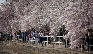 FILE - This April 10, 2013 file photo shows visitors walking along the Tidal Basin in Washington to enjoy the cherry blossom trees in full bloom. Washington's famous cherry blossom trees are expected to bring the first sure sign of spring between April 8 and 12, when they're predicted to reach peak bloom. National Park Service officials made the bloom prediction Tuesday as organizers announced plans for this year's National Cherry Blossom Festival. (AP Photo/Evan Vucci, File)