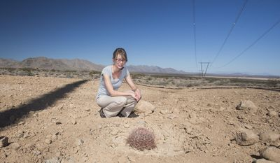 Caryn Wright, environmental scientist for NV Energy, views a replanted barrel cactus under the One Nevada Transmission Line about 45 miles north of Las Vegas on Tuesday, Feb, 25, 2014.  For three years NV Energy workers have been digging up plants that were growing under the 135-mile final section of the power transmission line joining Northern and Southern Nevada. NV Energy  replanting the plants as close as possible to the spots from where they were taken. (AP Photo/Las Vegas Review-Journal, Jeff Scheid)
