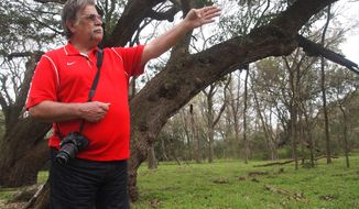 Joe Covington, whose extended family has long owned property in Snook, Texas, stands before one of the centuries-old live oaks on Friday, March 7, 2014. The Texas Department of Transportation made changes to a road project to spare the trees. (AP Photo/Austin American-Statesman, Asher Price)