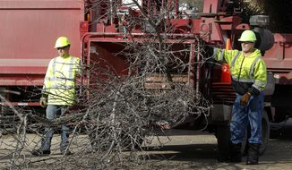 Glen Bearbower and Lawrence Harms run ash tree branches through a wood chipper on Willow Street in Waterloo, Iowa, Monday, March 10, 2014.  The invasive Asian beetle, which is fatal to ash trees, was found in Waterloo in late January. EAB already has devastated urban forests across the Midwest since first rearing its head domestically a dozen years ago in Michigan. (AP Photo/Waterloo Courier, Brandon Pollock)