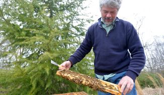 UGA researcher Keith Delaplane attends to bees at the UGA honeybee lab in Athens, Ga.,  on March 6, 2014.  Delaplane for years has studied bees and the reasons the possible reasons behind their population decline.  (AP Photo/The Banner-Herald, Richard Hamm) MAGS OUT; MANDATORY CREDIT