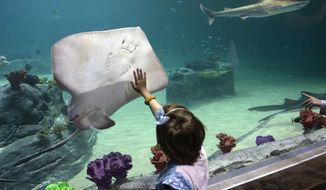 In this photo taken on Tuesday, March 25, 2014, a youngster touches the glass as a stingray glides past in the shark tank at the Loveland Living Planet Aquarium in Draper, Utah. The new aquarium, one of the largest in the country opened at its new home with a ribbon cutting and grand opening to the public on Tuesday. (AP Photo/The Salt Lake Tribune, Al Hartmann)  DESERET NEWS OUT; LOCAL TV OUT; MAGS OUT