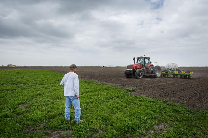 "John Wikoff, left, watches as John Elliott plants corn in what was once a rice field, Wednesday, March 19, 2014, in Bay City. ""It's disheartening to lose your rice farming and your livelihood,"" Elliott said. ""I hope we can survive this; we had to retool and spend over $250,000 to buy a planter, tractor and equipment."" Matagorda County farmers are being forced to downsize their farming operation and change crops, from rice to dry land corn, due to a lack of irrigation water for the third consecutive year from the Colorado River. (AP Photo/Houston Chronicle, Michael Paulsen/File)"