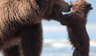 """This image released by Disney shows an adult bear named Sky and a cub named Scout in a scene from """"Bears."""" (AP Photo/Disney, Adam Chapman)"""