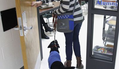In this March 17, 2014 photo, 16-year-old Abbey Perkowitz walks into class with 5-month-old Bailey, a service dog she is training at Grayslake Central High School in Grayslake, Ill. (AP Photo/Daily Herald, Steve Lundy)  MANDATORY CREDIT, MAGS OUT