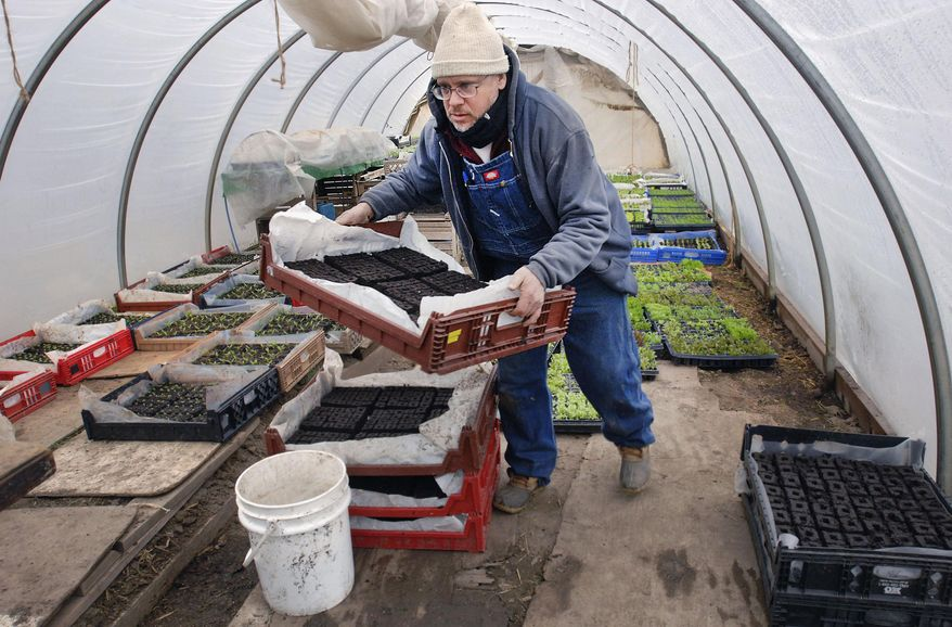 In this April 4, 2014 photo, Henry Brockman prepares to transfer shiso seedlings into growth medium while working in his greenhouse near Congerville, Ill. His produce operation sells by subscription, locally. Marketing online and in person has become more important for small farms. Since small farmers compete with large grocery chains, branding and marketing their farm and maintaining relationships with customers is an important part of business. (AP Photo/The Pantagraph, David Proeber)