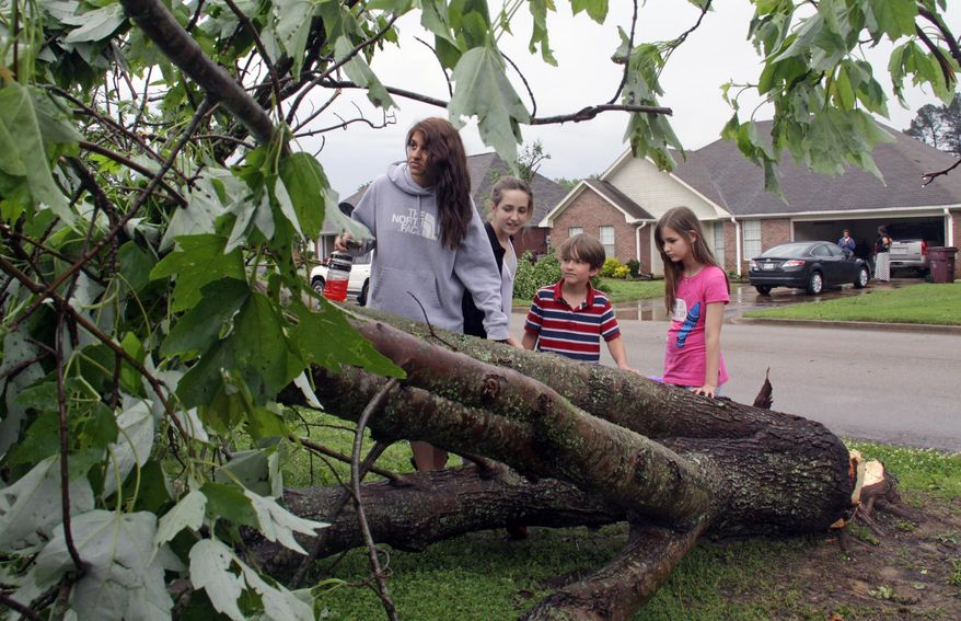 Seventeen year-old Deanna Locke and her siblings including, from left, Charlotte, 13; Drew, 9; and Trinity, 11; examine a downed tree across the street from their home in Tupelo, Miss., after a suspected tornado moved through town earlier on Monday, April 28, 2014.( AP Photo/Jim Lytle)