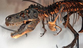 FILE - In this Sept. 119, 2013 file photo, a traveling replica of a Tyrannosaurus rex named Sue is displayed at the Washington Pavilion's Kirby Science Discovery Center in Sioux Falls, S.D. A movie screened in Hill City, S.D., on Saturday, May 3, 2014, told the story of the Tyrannosaurus caught in a complex legal battle over ownership. (AP Photo/Dirk Lammers)