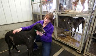 FILE-- In this Feb. 21, 2014, file photo, Melissa Schmidt holds her greyhound Blazin Spitfire at her farm in Bellevue, Iowa. Dog breeders, people opposed to dog racing, shelter managers and casino executives are all waiting to see whether Iowa Gov. Terry Branstad will sign a bill that doles out $70 million as part of a deal to reduce dog racing in Iowa. (AP Photo/The Telegraph Herald, Jessica Reilly)