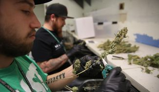 ** FILE ** Employees trim retail marijuana at 3D Cannabis Center, in Denver, Thursday, May 8, 2014. (AP Photo/Brennan Linsley)