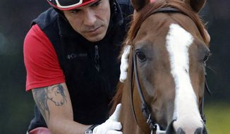 Exercise rider Willie Delgado rubs Kentucky Derby winner California Chrome's neck before a workout at Pimlico Race Course in Baltimore, Wednesday, May 14, 2014. The Preakness Stakes horse race is scheduled to take place Saturday. (AP Photo)