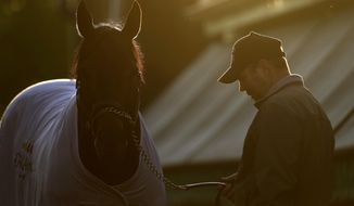 Ride On Curlin stands with trainer Billy Gowan after being bathed as the sun rises at Pimlico Race Course in Baltimore, Saturday, May 17, 2014, on the morning of the 139th running of the Preakness Stakes horse race. (AP Photo/Patrick Semansky)