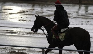 Preakness Stakes favorite California Chrome heads back to the barn after a morning workout in the rain under exercise rider Willie Delgado at Pimlico Race Course, Friday, May 16, 2014, in Baltimore. The 139th Preakness horse race takes place Saturday. (AP Photo/Garry Jones)
