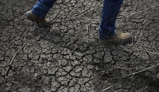 ADVANCE FOR USE TUESDAY, MAY 27, 2014, AND THEREAFTER- In this May 1, 2014 photo, fourth-generation rice farmer Josh Sheppard walks across the dried-up ditch at his rice farm in Richvale, Calif. California's 19th-century water laws give about 4,000 companies, farms and others unmonitored water while the state is mired in a three-year drought that has forced water cutbacks to cities and the nation's agricultural center. (AP Photo/Jae C. Hong)