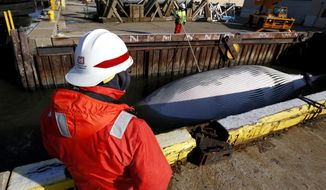 FILE- In this April 16, 2014 file photo, a member of the Army Corps of Engineers looks on as a finback is whale is secured before being pulled out of the water on a dry dock in Jersey City, N.J., after the whale was found dead in New York harbor over the weekend. The National Oceanic and Atmospheric Administration says the rate of strikes is higher than usual for this time of year. (AP Photo/Julio Cortez, File)