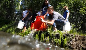 Sara Johnson of La Salle High School pours a bucket of Coho juvenile salmon into Ahtanum Creek west of Yakima, Wash. on Thursday, May 22, 2014. The La Salle students raise the salmon from eggs. (AP Photo/Yakima Herald-Republic, Mason Trinca)