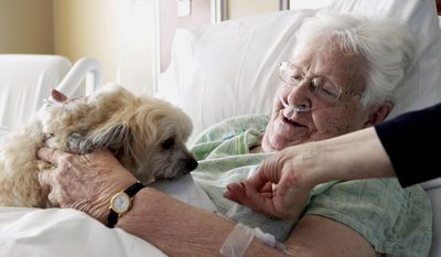In this April 29, 2014 photo, Jaxon, a 1-year-old javanese, sits and visits with Marybelle Novak, 88, of Dixon, Ill., as she recovers at KSB Hospital in Dixon. Jaxon is enrolled in the Pets and Wellness Service (PAWS) program at the hospital by owner Vickie Leigh. (AP Photo/Sauk Valley Media, Alex T. Paschal)