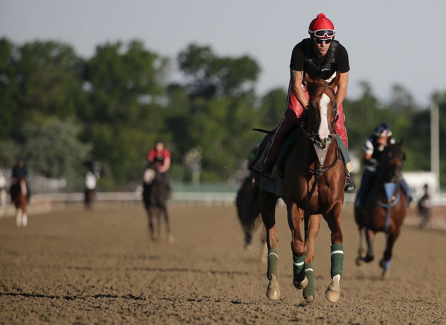 California Chrome takes a lap, with exercise rider Willie Delgado up, during a workout at Belmont Park, Friday, June 6, 2014, in Elmont, N.Y.  The Kentucky Derby and Preakness Stakes winner will attempt to become the first Triple Crown winner since Affirmed in 1978 when he races in the 146th running of the Belmont Stakes horse race on Saturday. (AP Photo/Julie Jacobson)