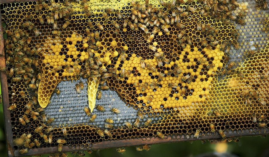 In this June 5, 2014 photo, honeybees populate a comb at Honey Hill Orchard in Waterman, Ill.  Steve Bock owns the orchard on which uses bees to help pollinate the apple trees. The harsh winter has led to heavy losses among hives of honeybees in northern Illinois and left farmers scrambling to replenish their hives to make sure the losses losses don't hurt their apple crops. (AP Photo-Daily Chronicle/Danielle Guerra) MANDATORY CREDIT