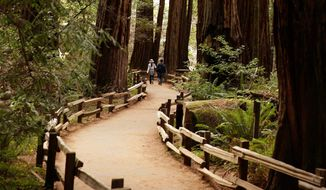 """The giant sequoias in Muir Woods have stood strong during centuries of human folly in a peaceful corner of the world still free of noxious technology and uninfected by a """"Happy"""" song. (Associated Press)"""