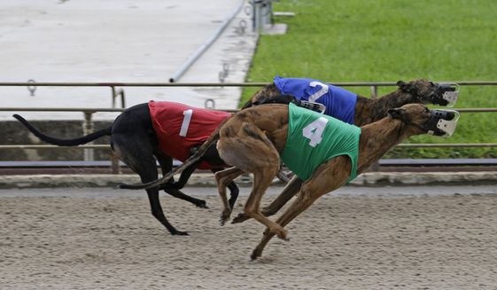 In this photo taken Tuesday, July 8, 2014, greyhounds race at Flagler Dog Track in Miami. Greyhound racing's decline began years ago as more states introduced or expanded casino-style gambling. (AP Photo/Alan Diaz)