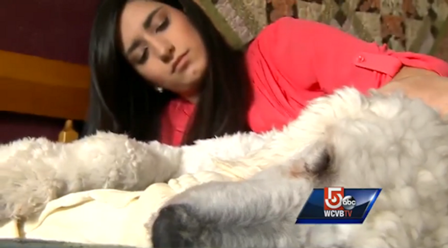 """TJ Maxx says it """"deeply regrets"""" an incident last week in which 19-year-old Sydney Corcoran, who survived the 2013 Boston Marathon bombings, was forced to leave a New Hampshire store because of her service dog, Koda. (WCVB)"""