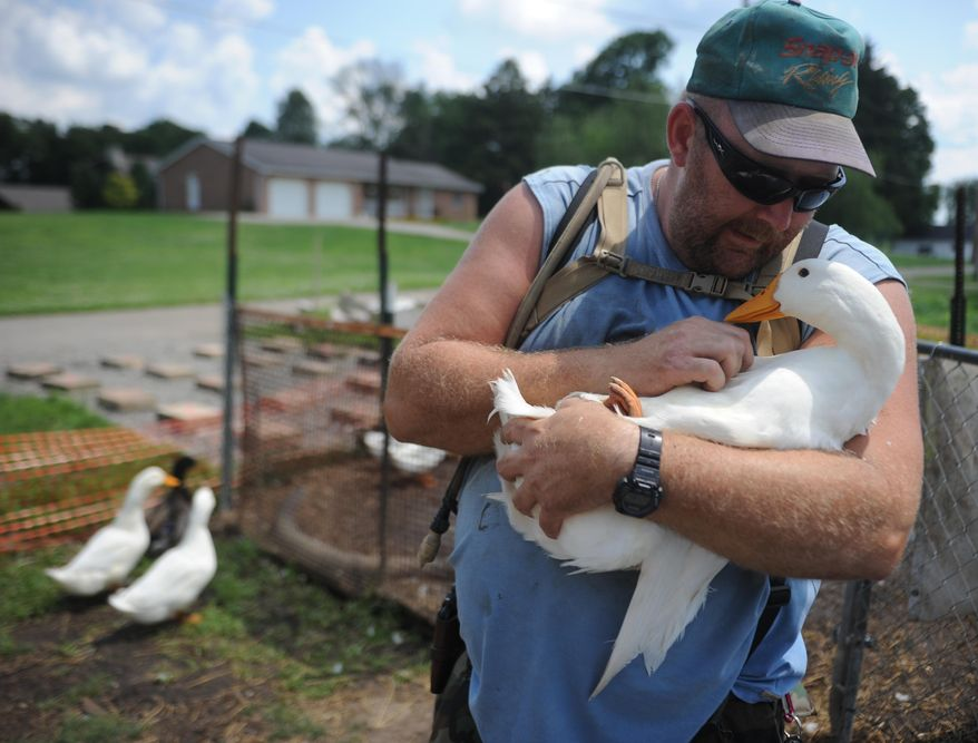 In this Thursday, July 10, 2014 photo, Iraq war veteran Darin Welker, 36, holds one of his ducks at his home in West Lafayette, Ohio. Welker, who served a year in 2005 for the Army National Guard, says his 14 pet ducks serve as mental and physical therapy for him. He's worried he'll have to give them up after village officials told him in May he can't keep them on his property. Welker was cited with a minor misdemeanor June 23 for having the ducks in his yard. He is scheduled to appear in Coshocton Municipal Court for a hearing Wednesday, July 23, 2014, and could face a $150 fine. (AP Photo/Coshocton Tribune, Trevor Jones)