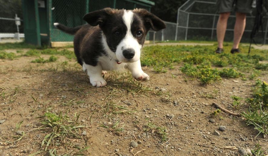Small dogs gain ground in Anchorage dog parks - Washington Times