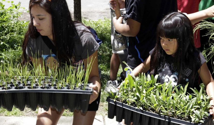 In this July 10, 2014 photo, Lilah White, left, and Natalie Cree Arguijo carry plants during a gardening exercise with the American Indian Center in Chicago. The center is using gardens to teach urban Native American youth about the importance of their connection to the land. (AP Photo/Stacy Thacker)