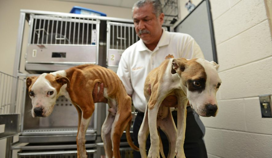 Animal Control Chief John DeCando holds two malnourished dogs that were found abandoned at East Side Park in Paterson, N.J., Monday, Aug. 25, 2014. A $1,000 reward is being offered for tips that lead to an arrest and conviction. (AP Photo/Northjersey.com, Tariq Zehawi) ONLINE OUT; MAGS OUT; TV OUT; INTERNET OUT; NO ARCHIVING; MANDATORY CREDIT