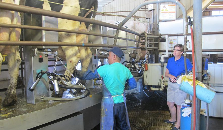 In a Aug. 5, 2014 photo, Bhutanese refugee Chandra Pradhan prepares cows to be milked at Noblehurst Farm, as farm director Sarah Noble-Moag looks on. Pradhan is among the first participants in a pilot program aimed at training resettled refugees to  work on New York's dairy farms instead of the more usual placements in factories and hotels. (AP Photo/Carolyn Thompson)