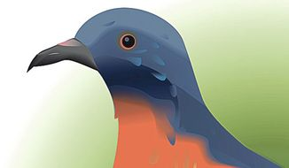 Illustration of the passenger pigeon by Linas Garsys/The Washington Times