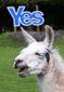 9_8_2014_britain-scotland-referen-108201.jpg