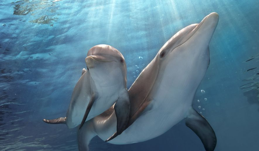 "A scene from family-friendly ""Dolphin Tale 2."" (AP Photo/Warner Bros. Pictures, Copyright Alcon Entertainment, LLC, Bob Talbot)"