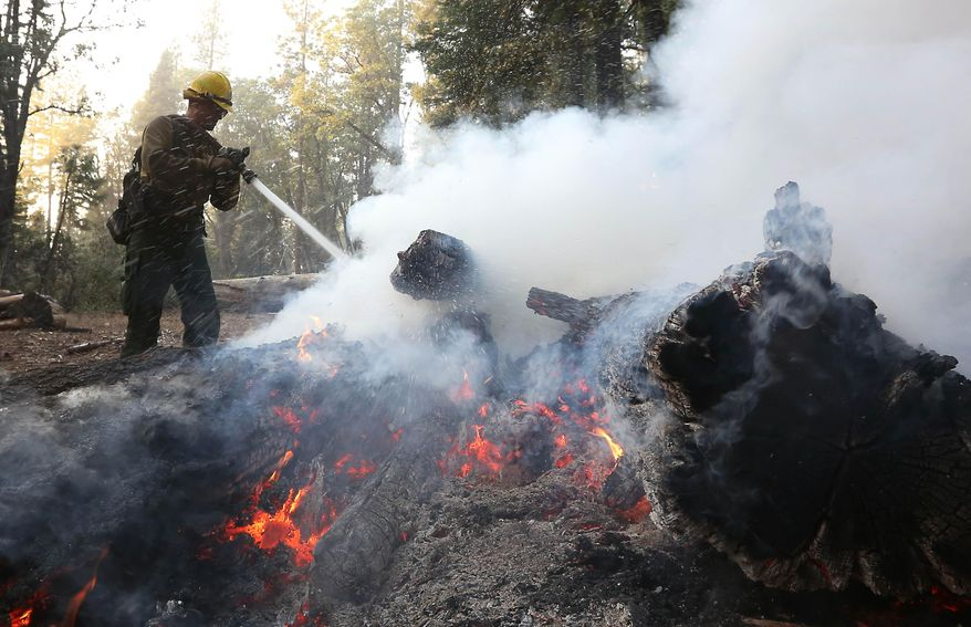 Firefighter Cameron Andersen, of the US Forest Service, pours water on burning embers while clearing hot spots of the King fire in the El Dorado National Forest near Georgetown, Calif., Thursday, Sept. 18, 2014.   More than 3,500 firefighters from various agencies are battling the blaze that started Saturday and has burned more than 70,000 acres.(AP Photo/Rich Pedroncelli)