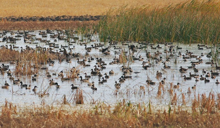 FILE - This 2005 file photo provided by the North Dakota Game and Fish Department shows waterfowl swimming on wetland in McHenry County, N D. The North Dakota Grain Growers Association is raising questions about the working relationship between the federal government's Natural Resources Conservation Service and the private group Ducks Unlimited that works to boost wetlands and waterfowl. (AP Photo/North Dakota Game and Fish Department, File)