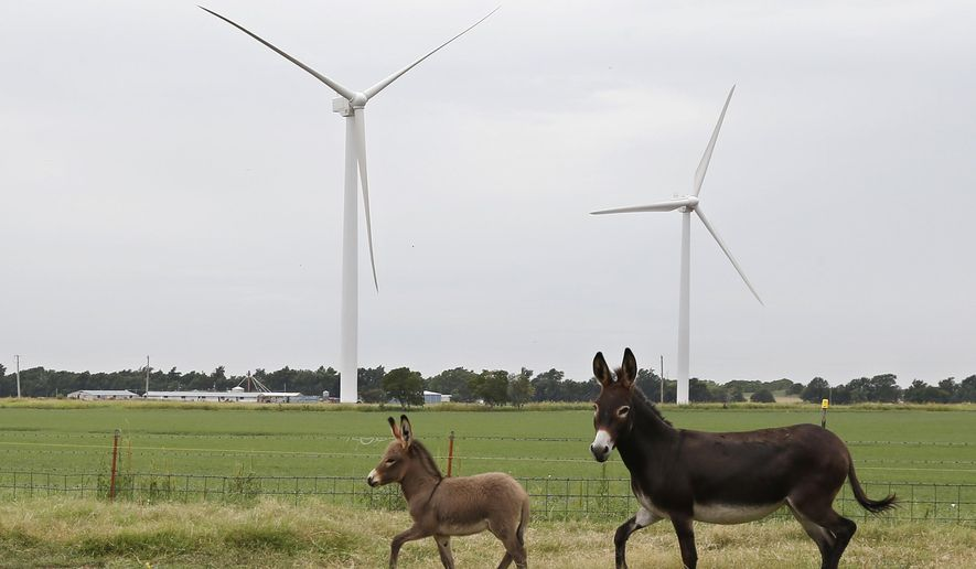 In this July 28, 2014 photo, two donkeys run through a pasture at the home of Tammy and Rick Huffstutlar in front of wind turbines in Calumet, Okla. A decade ago, states offered wind-energy developers an open-armed embrace, envisioning a bright future for an industry that would offer cheap electricity, new jobs and steady income for large landowners. Today, many of the same political leaders who initially welcomed the wind industry want to regulate it more tightly.   (AP Photo/Sue Ogrocki)