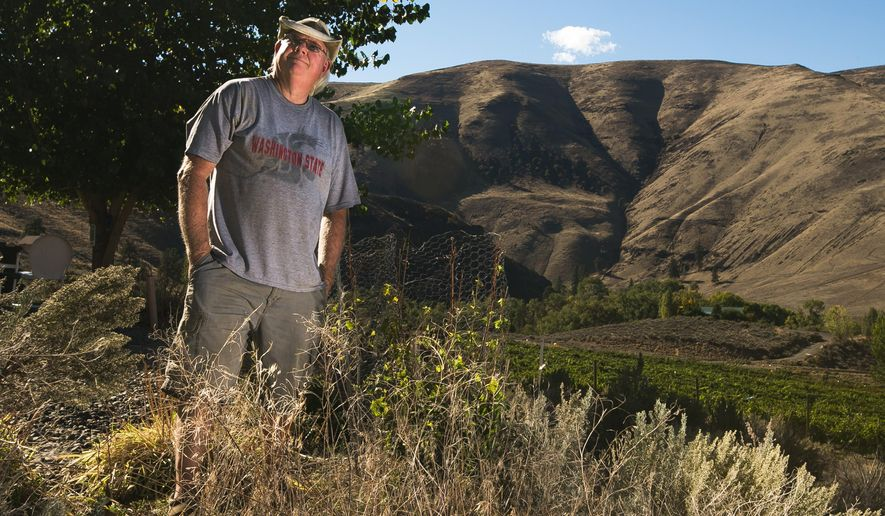 Gary Cox overlooks the grounds where he will plant his Cosmic Crisp apple trees at Cox Canyon Vineyards in the Yakima River Canyon near Ellensburg, Wash. on Tuesday, Oct. 7, 2014. Cox was one of 24 growers that won the lottery to receive the first batch of the new apple variety in 2017. (AP Photo/Yakima Herald-Republic, Mason Trinca)