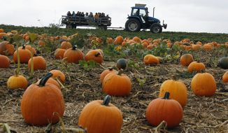 Many of the pumpkins that are the cornerstones of festivals and events financed by tax dollars were grown with the assistance of pricey farm subsidies. (Associated Press)