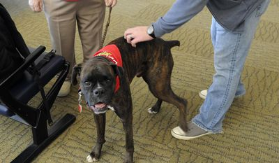 FOR USE SUNDAY OCT. 12 AND THEREAFTER - In this Oct. 6, 2014 photo, Marlene Stachowiak, with Paws For Pax, left, stands nearby as Tim Losh pets her dog, Slider, a boxer, during a visit to Augusta Regional Airportt in Augusta  in Augusta, Ga. (AP Photo/The Augusta Chronicle, Michael Holahan)