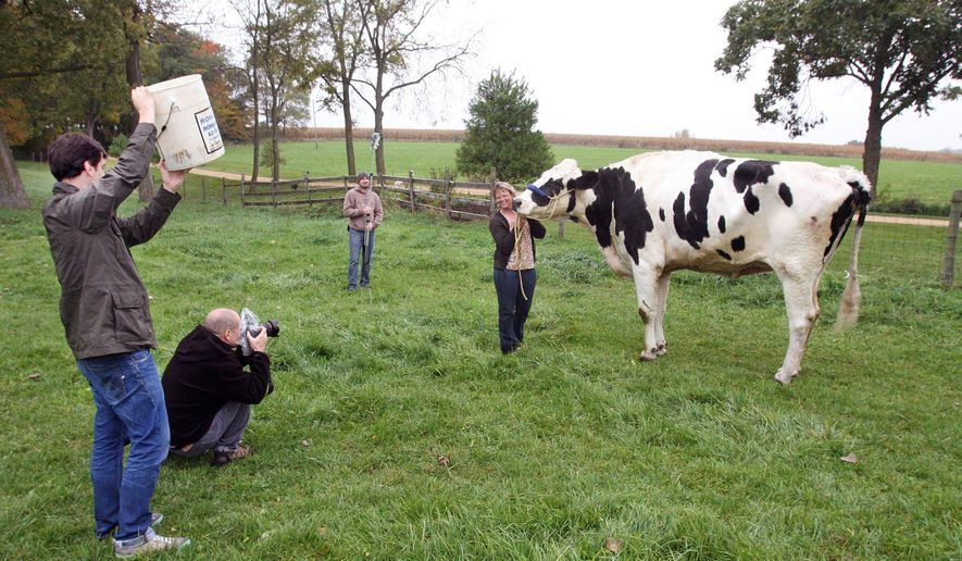 In this Oct. 13, 2014 photo, Patty Hanson is all smiles for the camera as she holds onto her Holstein cow Blosom while photographers from the Guinness World Records in London, England document the world's tallest cow for the 2016 book of world records, in Orangeville Ill. Hanson received notification of the distinction for the world record in August about Blosom, who measured 6 feet 4 inches tall at the wither (shoulder) in August. (AP Photo/The Journal-Standard, Jane Lethlean)
