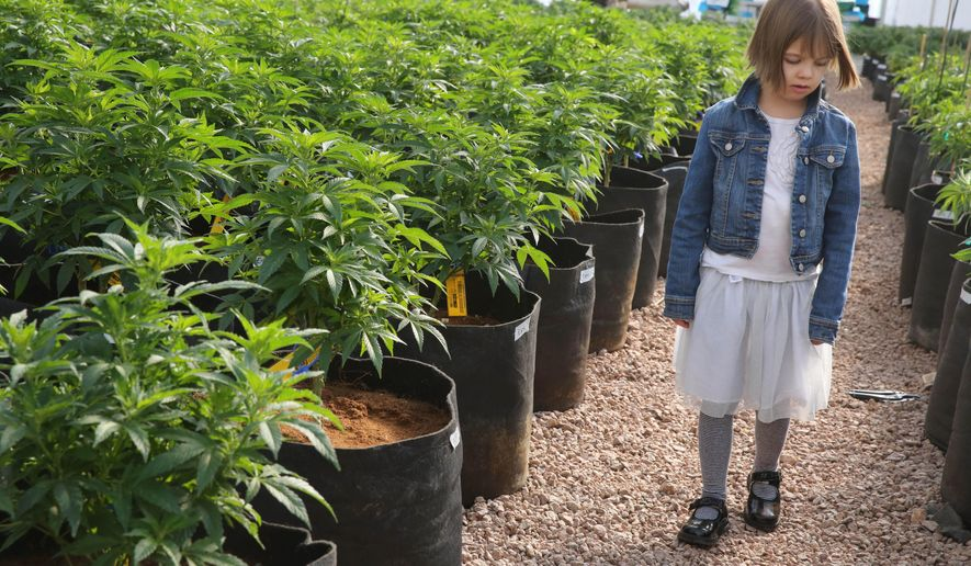 In this Feb. 7, 2014 photo, seven year old girl Charlotte Figi, who's parent describe her as once being severely and untreatably ill, walks around inside a greenhouse for a special strain of medical marijuana known as Charlotte's Web, which was named after Charlotte early in her treatment, at a grow location in a remote spot in the mountains west of Colorado Springs, Colo. Colol,  A panel of legislative leaders on Wednesday, Oct. 15, 2014 approved a bill on a 13-5 vote that would limit how many plants marijuana caregivers can grow for their patients. (AP Photo/Brennan Linsley)
